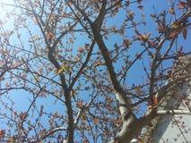 与叶子的树枝反对蓝天 免版税库存图片