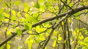 与叶子的树枝在降雨量以后 免版税库存照片