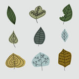 与叶子的样式,抽象叶子纹理,集合 库存照片