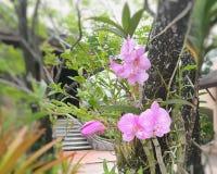与叶子的桃红色兰花和根在树干增长 库存图片
