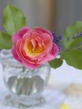 与叶子的桃红色玫瑰在一个玻璃花瓶 库存图片