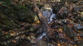 与叶子的森林小河在秋天时间间隔移动式摄影车射击 影视素材