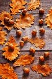 与叶子的橡子 免版税库存照片