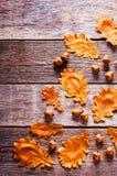 与叶子的橡子 免版税库存图片