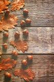 与叶子的橡子 免版税图库摄影