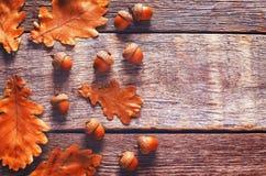与叶子的橡子 库存图片