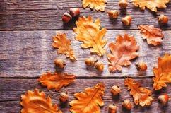 与叶子的橡子 库存照片