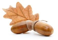 与叶子的橡木橡子 图库摄影