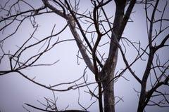 与叶子的死的树背景 免版税库存照片