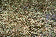 与叶子的池塘表面 库存照片