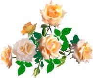 与叶子的淡黄色六朵被隔绝的玫瑰 免版税库存图片