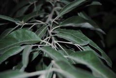 与叶子的烟绿色分支 免版税图库摄影