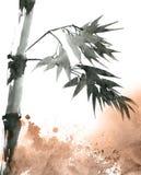 与叶子的热带竹子 库存照片