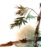 与叶子的热带竹子 免版税图库摄影