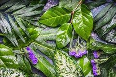 与叶子的热带自然背景用露水水下降并且开花 免版税库存照片