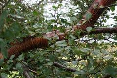 与叶子的特写镜头大树枝 免版税图库摄影