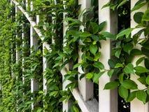 与叶子的白色篱芭笼子 移动摄影 免版税库存照片