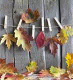 与叶子的秋天摘要在葡萄酒板 图库摄影
