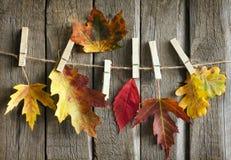与叶子的秋天摘要在葡萄酒板 免版税图库摄影
