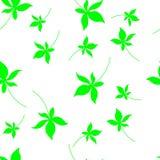 与叶子的秋天无缝的模式 与叶子印刷品的明信片 结构树叶子 皇族释放例证