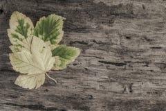 与叶子的秋天模板在木背景 库存照片