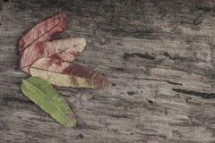 与叶子的秋天模板在木背景 免版税库存图片