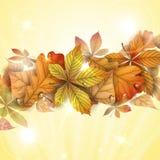 与叶子的秋天背景。 免版税库存图片