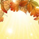 与叶子的秋天背景。 库存图片