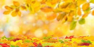 与叶子的秋天背景 免版税库存照片