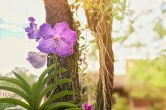 与叶子的紫色在树干的兰花和根和与火光的被弄脏的bokeh背景点燃 库存图片