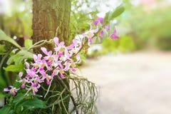 与叶子的紫色在树干的兰花和根 免版税库存图片