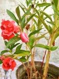与叶子的红色花 免版税库存照片