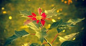 与叶子的红色花 免版税库存图片