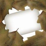 与叶子的纸张,框架 免版税库存图片