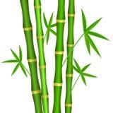与叶子的绿色竹词根在白色背景 皇族释放例证