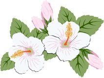 与叶子的美丽的桃红色木槿花 光栅例证 库存图片