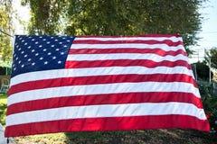 与叶子的美国国旗从树在背景中 库存图片