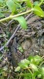 与叶子的老树 库存照片