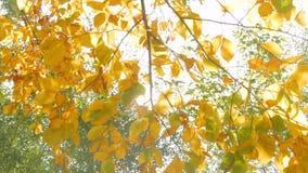与叶子的自然背景 股票视频