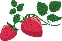 与叶子的草莓分支,夏天红色莓果 向量例证