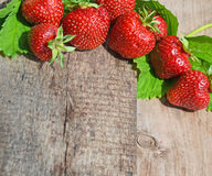 与叶子的草莓在树看法 免版税库存图片