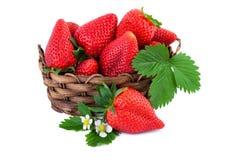 与叶子的草莓新鲜的有机草莓在白色背景隔绝的柳条筐 库存图片