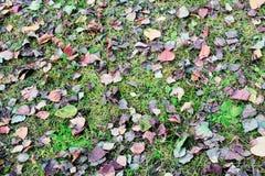 与叶子的草 免版税图库摄影