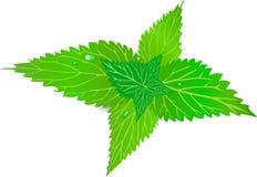 与叶子的荨麻,绿草,烧离开 库存照片