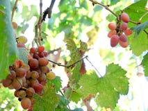 与叶子的葡萄 免版税库存图片