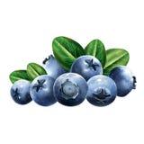 与叶子的蓝莓 库存图片