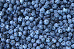 与叶子的蓝莓 库存照片