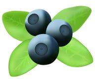 与叶子的蓝莓 免版税图库摄影