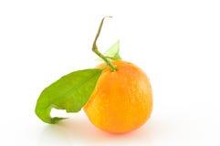 与叶子的蜜桔在一个空白背景 免版税库存图片