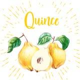 与叶子的黄色成熟柑橘在镶有钻石的旭日形首饰的背景 免版税库存照片